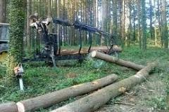 tn_Chargement bois en forêt